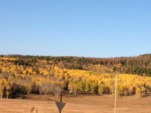 The perfect weekend for aspens